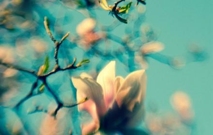 Retro Magnolias