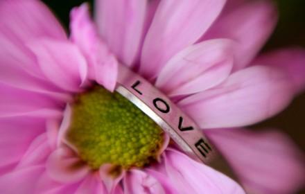 Love Pink Crysanthemum