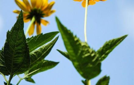 Flower Box Yellow