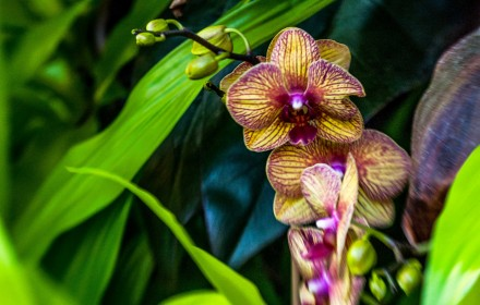 Yellow and Purple Orchid 1
