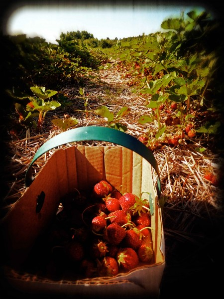 strawberrybasketweb
