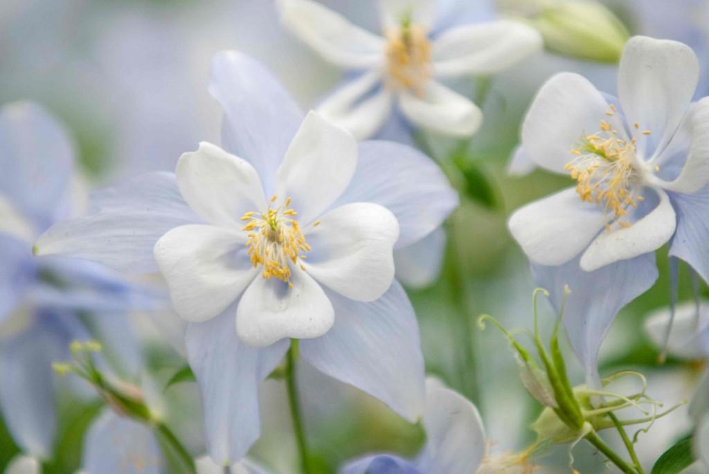 Spring2014_041414_0413-1