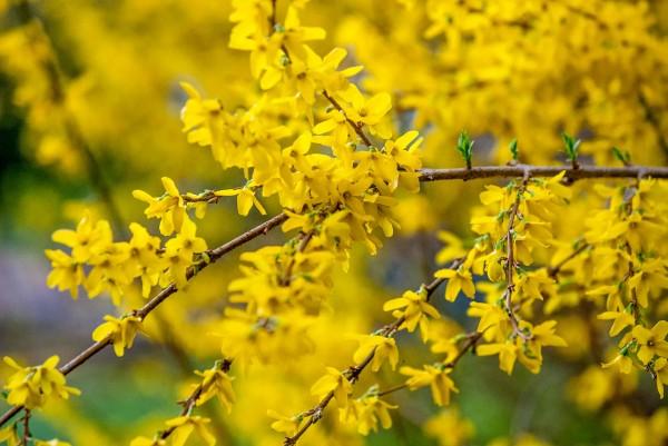 Spring2014_041414_0049-1