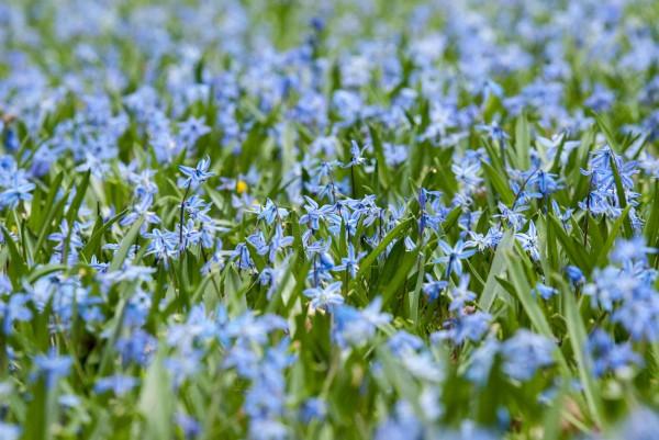 Spring2014_041414_0054-1web