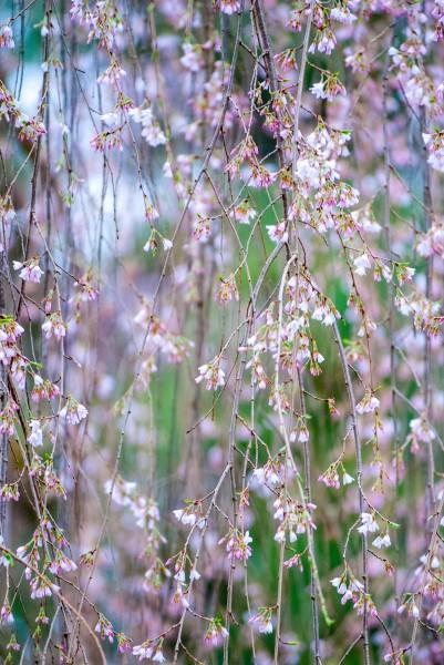 Spring2014_041414_0237-1-1web