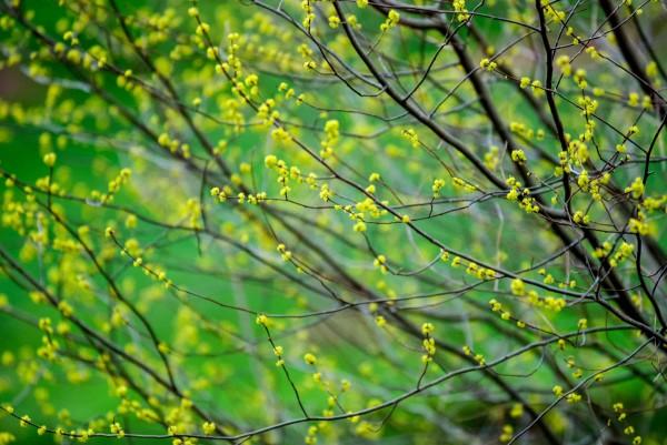 Spring2014_041414_0240-1