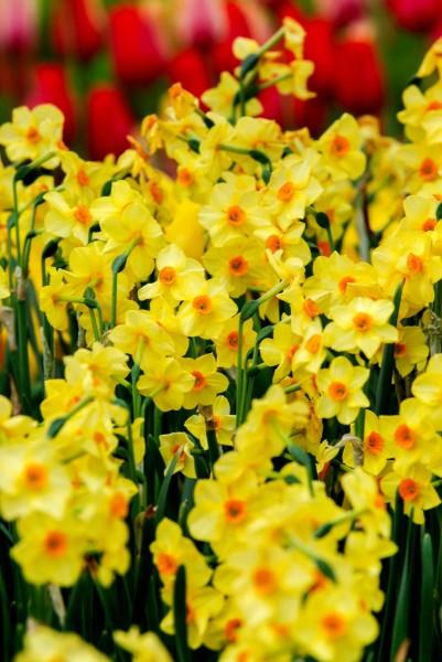 Spring2014c_0383-1web