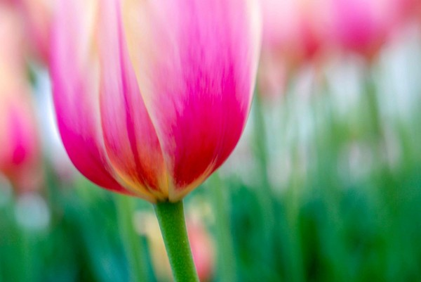 Spring2014c_0664-1
