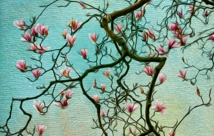 Pink Magnolia Branching Out