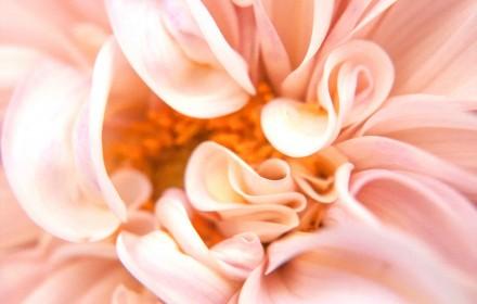 Luscious Pink Swirls