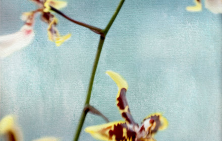 Yellow Orchid on Blue 2