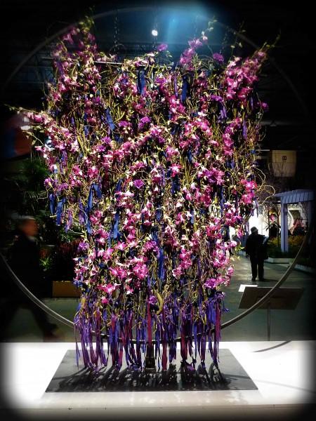 orchidsweb