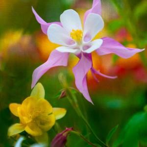 Spring2014d_0071-1web