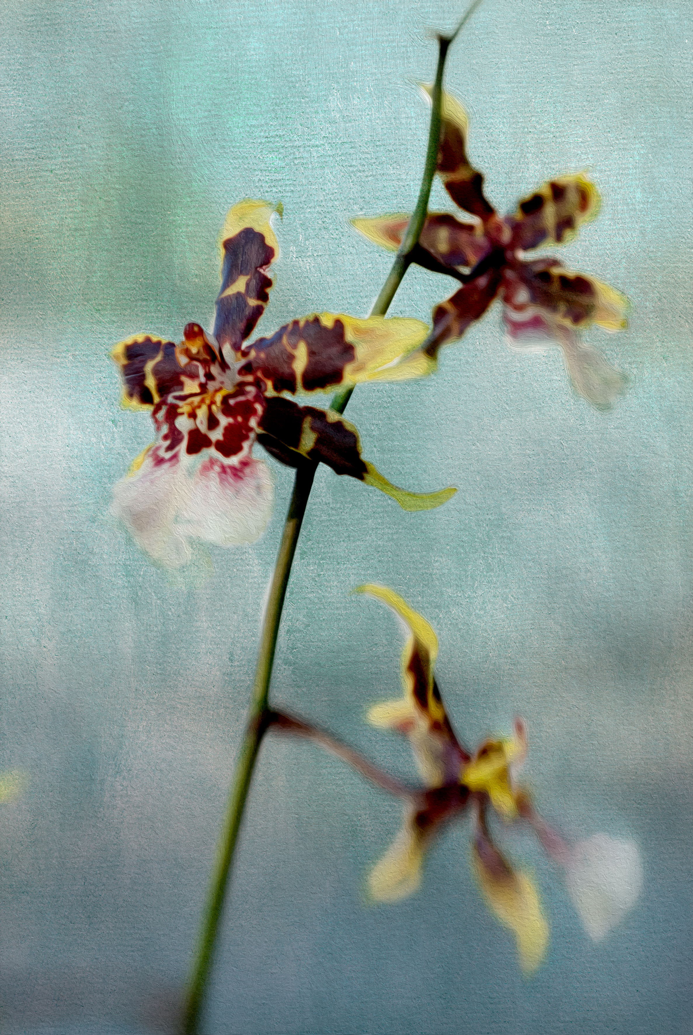 Photographing Orchids – A Story